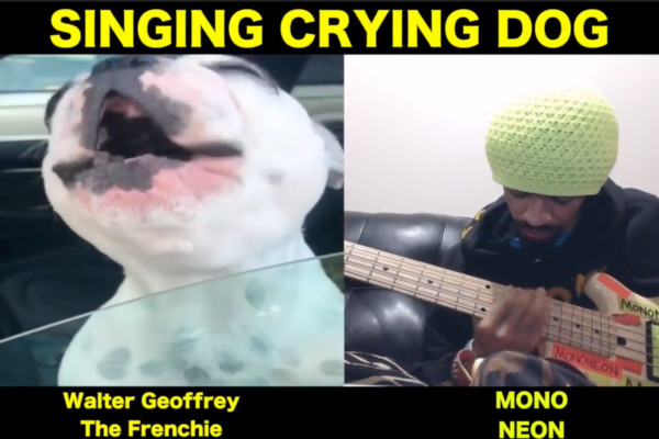 """MonoNeon: """"Singing Crying Dog"""" with Walter Geoffrey the Frenchie"""